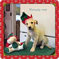 Adopt A Pet :: Monopoly - Harmony, Glocester, RI