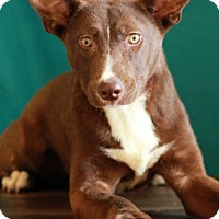 Adopt A Pet :: Jacky - Waldorf, MD