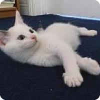 Adopt A Pet :: Sebastian and Ariel - Mission Viejo, CA