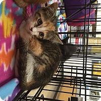 Adopt A Pet :: Millie - San Antonio, TX