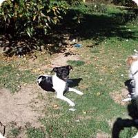 Adopt A Pet :: Macy - Fultonham, NY