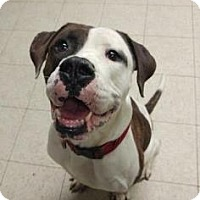 Adopt A Pet :: Brantley- Ohio - Fulton, MO