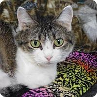 Adopt A Pet :: Lulu - Winston-Salem, NC