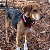 Adopt A Pet :: Spiegler - Burbank, OH
