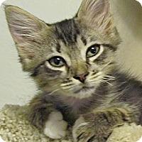 Adopt A Pet :: Willow - Seminole, FL