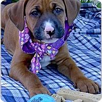 Adopt A Pet :: Pantera sweety - Sacramento, CA
