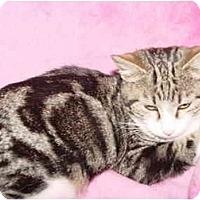 Adopt A Pet :: Rascal - KANSAS, MO