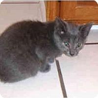 Adopt A Pet :: Wynn - Colmar, PA