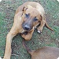 Adopt A Pet :: Veronica - Bakersfield, CA