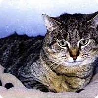 Adopt A Pet :: Rocky Rhodes - Medway, MA