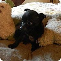 Adopt A Pet :: Barbie - Staunton, VA