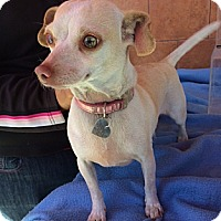 Adopt A Pet :: Jenny - North Hollywood, CA