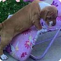 Adopt A Pet :: Luna - Marlton, NJ