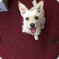 Adopt A Pet :: Matthey - Sherman Oaks, CA