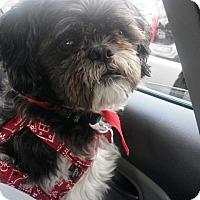 Adopt A Pet :: TUCKER - Eden Prairie, MN