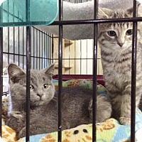 Adopt A Pet :: Sweetie Pie - Byron Center, MI