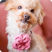 Adopt A Pet :: Wendy is very happy! - Redondo Beach, CA