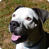 Adopt A Pet :: Foster - Greensboro, NC