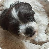 Adopt A Pet :: Cash - Inver Grove, MN