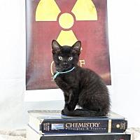 Adopt A Pet :: Marie Curie - Glastonbury, CT