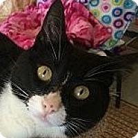 Adopt A Pet :: Rain - Winchester, CA