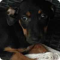 Adopt A Pet :: Meka - Louisville, KY
