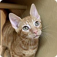 Adopt A Pet :: Chansey (with Tangela) - Fairfax, VA