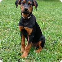 Adopt A Pet :: Kel - New Oxford, PA