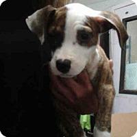 Adopt A Pet :: PACO - Fort Walton Beach, FL