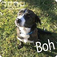 Border Collie Mix Dog for adoption in Regina, Saskatchewan - Boh