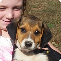 Adopt A Pet :: Sadie - castalian springs, TN