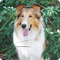 Adopt A Pet :: Mason *New* 2 years old - Stafford, TX