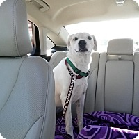 Adopt A Pet :: Barker - Houston, TX