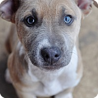 Adopt A Pet :: Taylor - College Station, TX