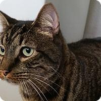 Adopt A Pet :: Merle - Sarasota, FL