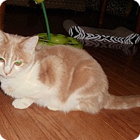 Adopt A Pet :: Angel - Evans, WV