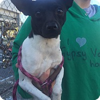 Adopt A Pet :: Tina - Gainesville, FL