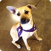 Adopt A Pet :: Iva - Irving, TX