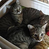 Adopt A Pet :: Vickie - Summerville, SC