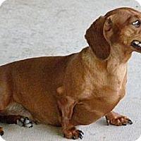 Adopt A Pet :: Kayla - San Jose, CA
