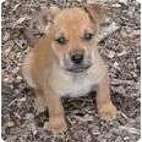 Adopt A Pet :: Blotch - Allentown, PA