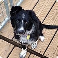 Adopt A Pet :: Viva - Garland, TX