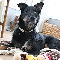 Adopt A Pet :: Brutus - Hamilton, ON
