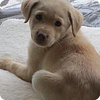 Adopt A Pet :: Berry Pup - Foster, RI