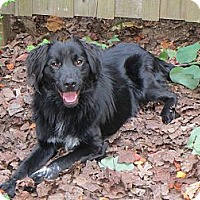 Adopt A Pet :: Kane - Brattleboro, VT