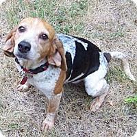 Adopt A Pet :: Babs - Novi, MI