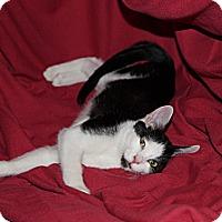 Adopt A Pet :: Guy - Pasadena, CA