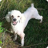 Adopt A Pet :: Higgins - Russellville, KY