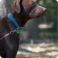 Adopt A Pet :: Gusto - Salem, MA