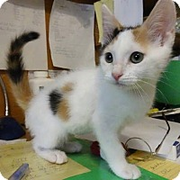 Adopt A Pet :: Carly - Colmar, PA